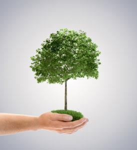 Приметы о деревьях