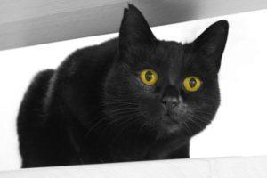 Хорошие приметы о чёрных котах
